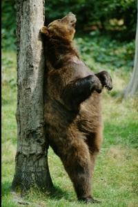 Esse é um ursinho serelepe com saudade do CU